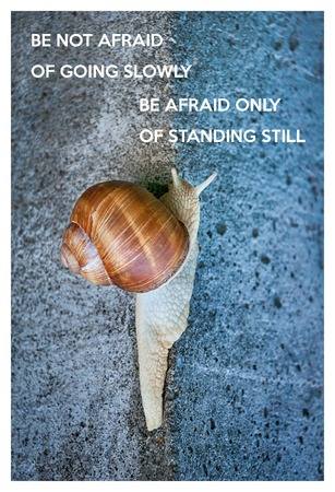 snail: Inspirational quote with words be not afraid of going slowly, be afraid only of standing still. Large snail crawling on a stone wall Stock Photo