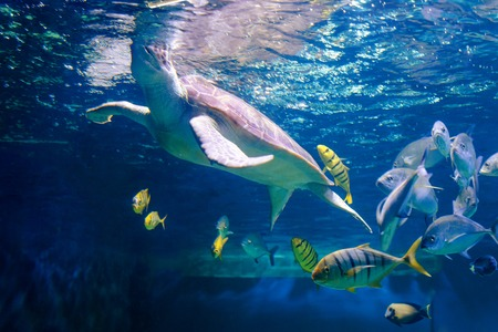 Coral reef with many fishes and sea turtle Stock Photo