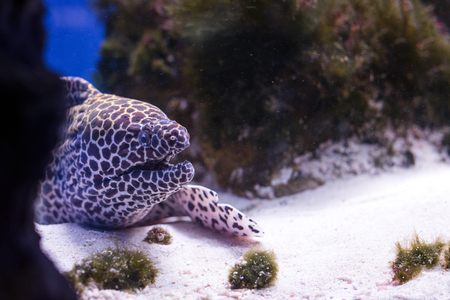 coral reef underwater: Tropical fishes swim near coral reef. Underwater life