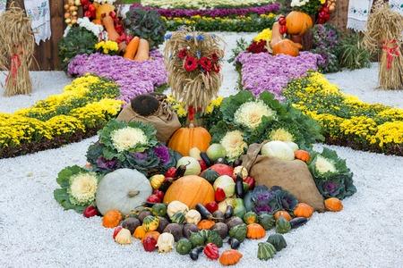 Freshly harvested summer vegetables. Large harvest of different vegetables outdoor