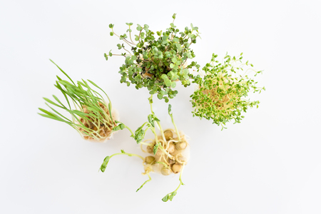 Growing microgreens on white background. Healthy eating concept of fresh garden produce organically grown as a symbol of health. Top view.