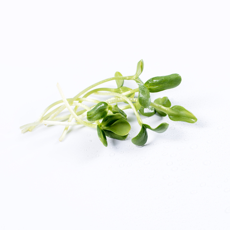 Heap of sunflower sprouts, micro greens on white background. Healthy eating concept of fresh garden produce organically grown as a symbol of health and vitamins from nature. Microgreens closeup.
