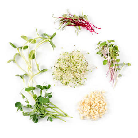 Different types of micro greens on white background. Healthy eating concept of fresh garden produce organically grown as a symbol of health and vitamins from nature. Microgreens closeup. Stockfoto