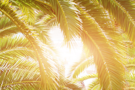 Heart made of palm tree leaves. Travel and summer tourism concept Stock Photo