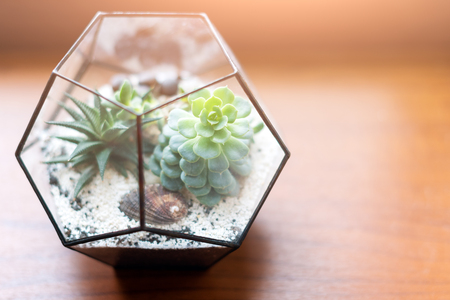 Mini succulent garden in glass terrarium on wooden windowsill. Succulents with sand and rocks in glass box. Home decoration elements