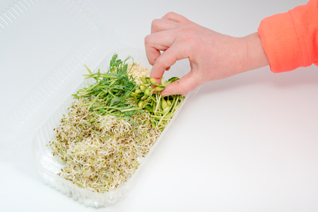 Woman hand holding micro greens. Plastic container with greens on white background. Healthy eating concept of fresh garden produce organically grown as a symbol of health and vitamins from nature. Microgreens packed for fringe storage or sale.