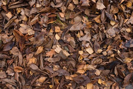 Dry autumn leaves in orange and brown colors. Close-up. Dark autumn background. Reklamní fotografie