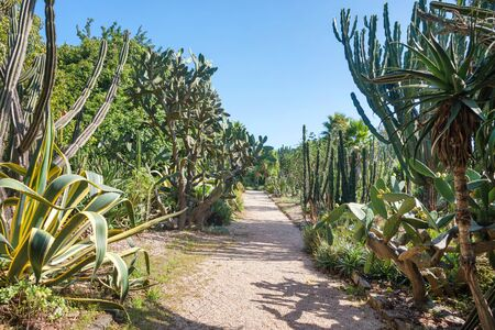 Open exotic garden, botanical garden with big cactus in a sunny summer day in Porto, Portugal