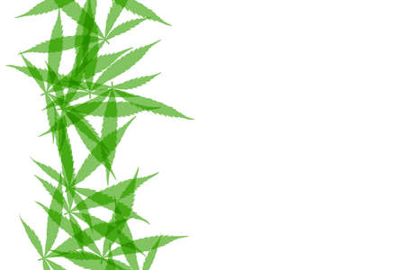 Green cannabis leaves background. Drug marijuana herb leaves shapes with copyspace for text.