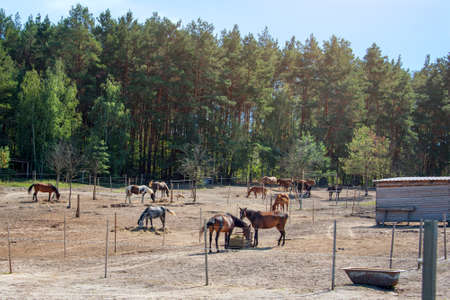 Horses feeding on ranch. Horses eating hay on the farm Stock fotó