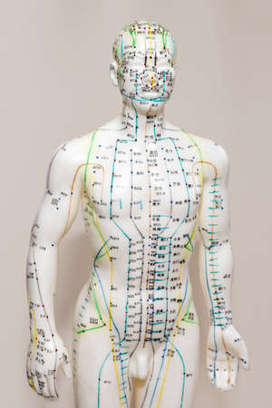 Oriental Medicine model in hospital. Plastic male acupuncture model. Traditional Chinese medicine. It is most often used to attempt pain relief. Stockfoto