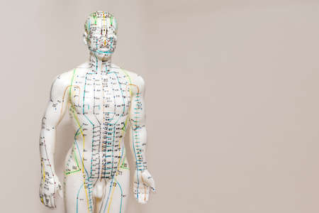 Oriental Medicine model in hospital. Plastic male acupuncture model. Traditional Chinese medicine. It is most often used to attempt pain relief. Copyspace for text.