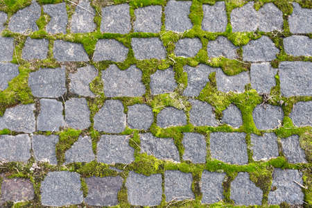 Cobblestoned pavement, green moss between brick background. Old stone pavement texture. Cobbles closeup with green grass in the seams. Stone paved walkway in old town