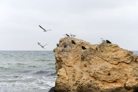 Seagulls on big rocks on the Black Sea coast in bad cold stormy weather