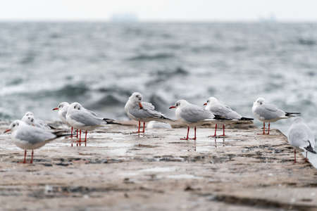 Seagulls on old pier on the Black Sea coast in bad cold stormy weather