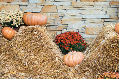 Autumn decor with natural straw bale, pumpkins, flowers. Harvest and garden outdoor decorations for Halloween, Thanksgiving, autumn season still life. Fall styled composition