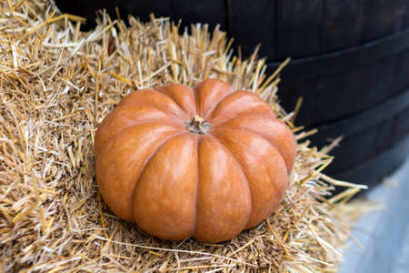 Autumn decor with natural straw bale and pumpkins. Harvest and garden outdoor decorations for Halloween, Thanksgiving, autumn season still life