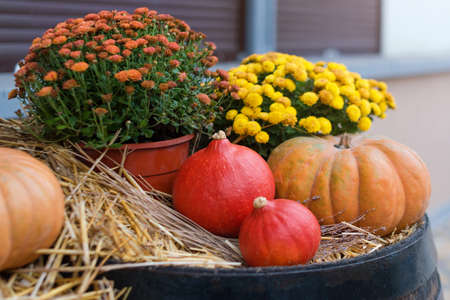 Autumn decor with natural straw bale, pumpkins, flowers and old wooden barrels. Harvest and garden outdoor decorations for Halloween, Thanksgiving, autumn season still life. Fall styled composition