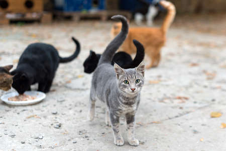 Stray cats eating on the street. A group of homeless and hungry street cats eating food given by volunteers. Feeding a group of wild stray cats, animal protection and adoption concept. Standard-Bild