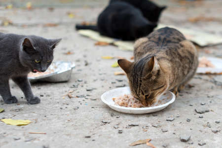 Stray cats eating on the street. A group of homeless and hungry street cats eating food given by volunteers. Feeding a group of wild stray cats, animal protection and adoption concept. 版權商用圖片
