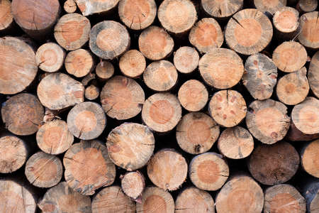 Pile of wooden logs stacked together on top of each other. Natural wood, sawn logs as background. Wall of stacked wood logs. 版權商用圖片