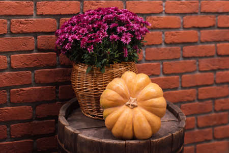 Autumn decor with pumpkin and flowers on old wooden barrel. Harvest and garden outdoor decorations for Halloween, Thanksgiving, autumn season still life. Fall styled composition