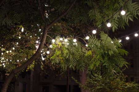 Backyard illumination, light in the evening garden, electric lanterns with round diffuser. Lamp garland of light bulbs on a tree branch among the leaves, dark illuminate night scene