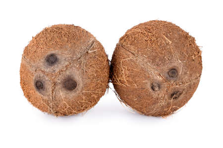 Whole coconuts isolated on white background. De-husked coconut fruits showing the characteristic three pores