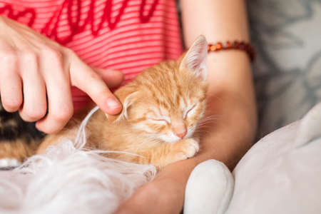 Cute kitten sleeping in female hands. Pet owner and her pet, lovely animals. Ginger baby cat relaxing, cozy sleep and nap time with pets.