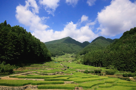 四谷の田んぼ 写真素材