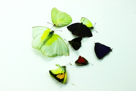 morir mariposa photo