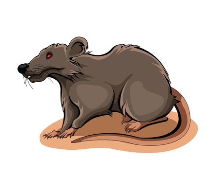 basement: Rat