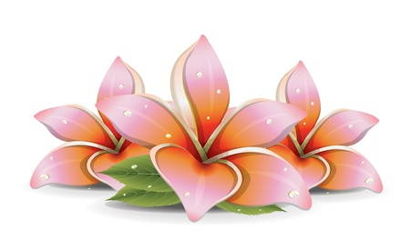 water lilly: Pink Lilies