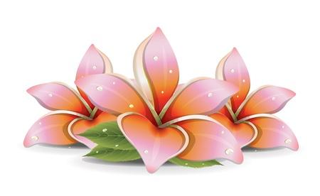 Roze Lelies