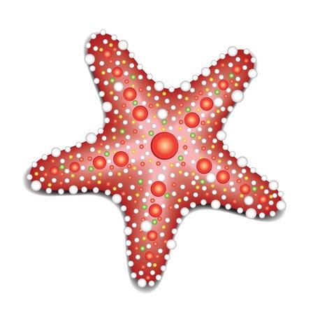 marine crustaceans: Starfish