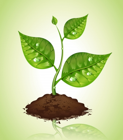 potting soil: Plant