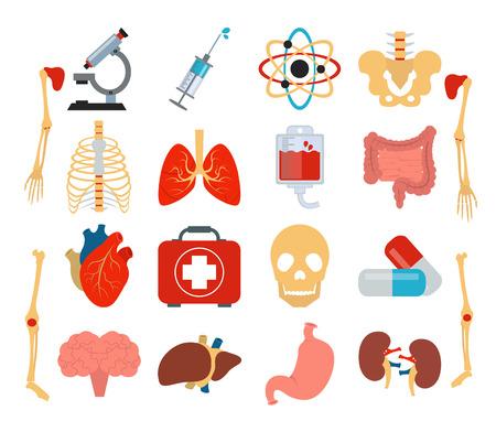 Stock Vector medicina anatomía icono conjunto plana Ilustración de vector