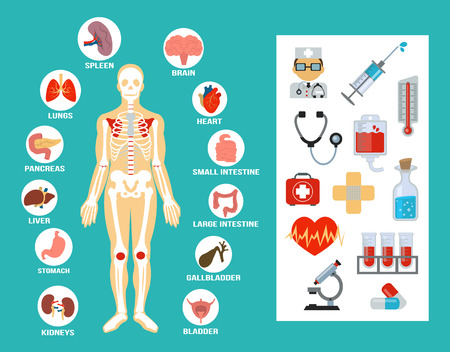 internal organ: Vector anatomy flat icon set Illustration