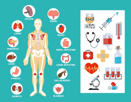 higado humano: Vector conjunto de iconos de la anatomía plana