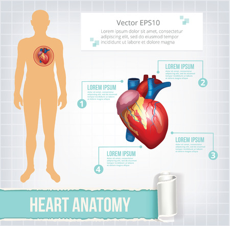 heart disease: Vector heart infographics banner illustration