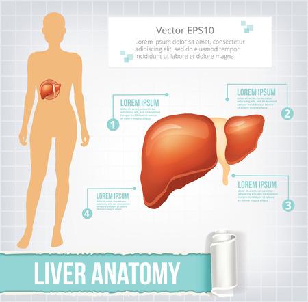 cystic: Vector liver infographics banner illustration Illustration