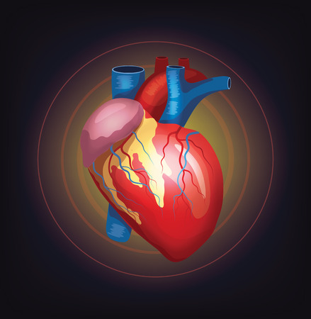 chest pain: Vector realistic heart illustration