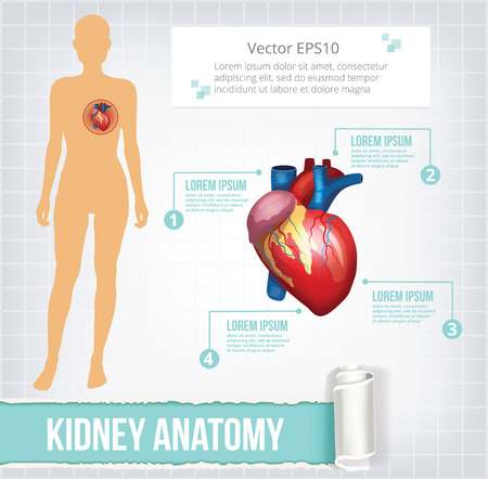 body heart: Vector heart infographics banner illustration