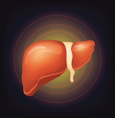 transplant: Vector realistic liver illustration