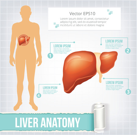 gastrointestinal system: Vector liver infographics banner illustration Illustration