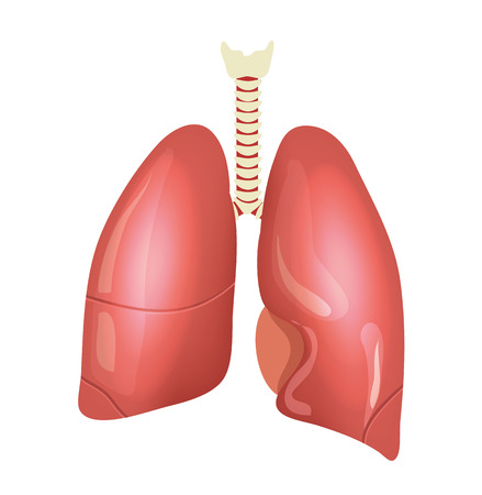 cavity: Vector lungs illustration Illustration