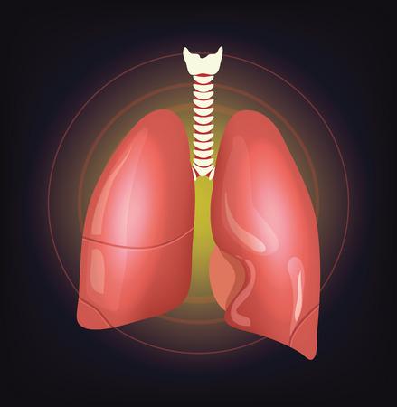 klatki piersiowej: Ilustracja wektora realistyczne płuca Ilustracja