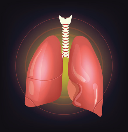 bronchiole: Vector realistic lungs illustration Illustration