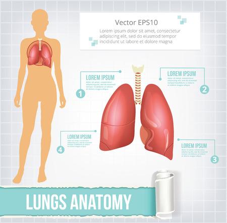 klatki piersiowej: Wektor ilustracja baner infografiki płuc