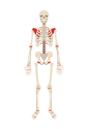 x stand: Vector skeleton flat illustration